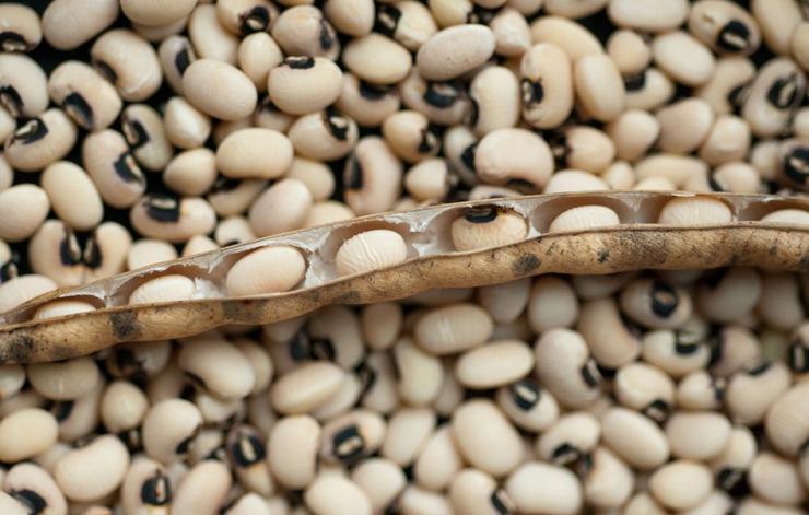 cowpea or black eyed peas