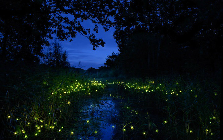 How To Attract Fireflies To Your Yard 5 Essential Ungardening Hacks General Health Magazine